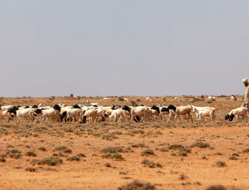 How climate insecurity could trigger more conflict in Somalia – A. E. Yaw Tchie